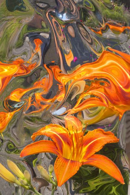gigli-di-fuoco (2)