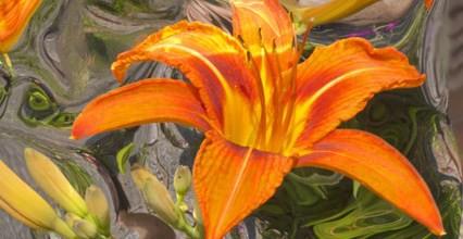 Il fiore: Il legno si ricorda del fuoco