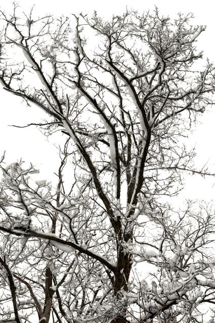 Neve-di-marzo