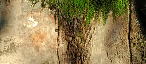 """Movimento energetico """"Legno"""": La germinazione"""