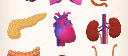 Lezioni di MOVIMENTO SOMATICO: Gli organi come supporto al movimento